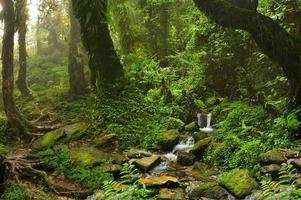 selva do nepal foto