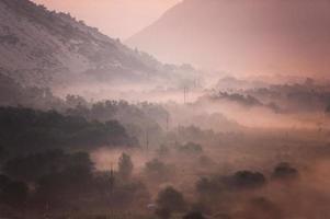névoa da selva foto