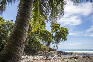 praia e selva na costa rica foto
