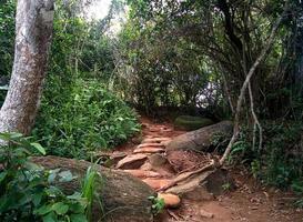 trilha na selva