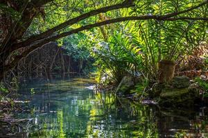 selva interior foto