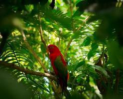 papagaio exótico na selva foto