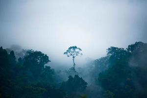 a árvore que se destaca na selva. foto