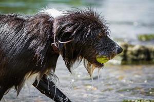 Nasser Hund foto