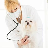 no veterinário foto