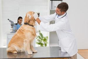 veterinário examinando os dentes de um cachorro fofo foto