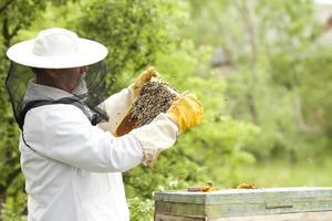 apicultor trabalhando com abelhas foto