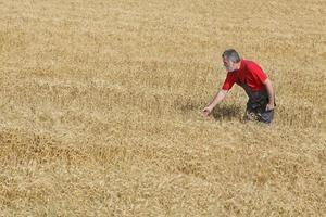 cena agrícola, agricultor ou agrônomo inspecionam o campo de trigo
