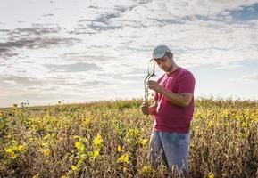 agricultor em campos de soja foto