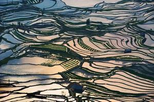 terraços de arroz foto