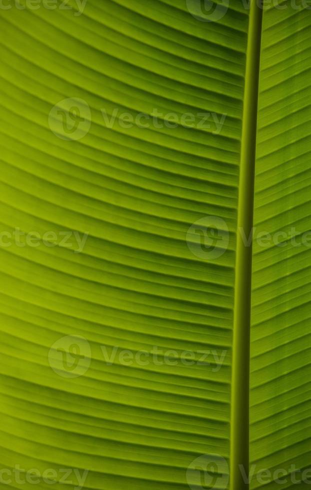 schönes grünes Blatt foto