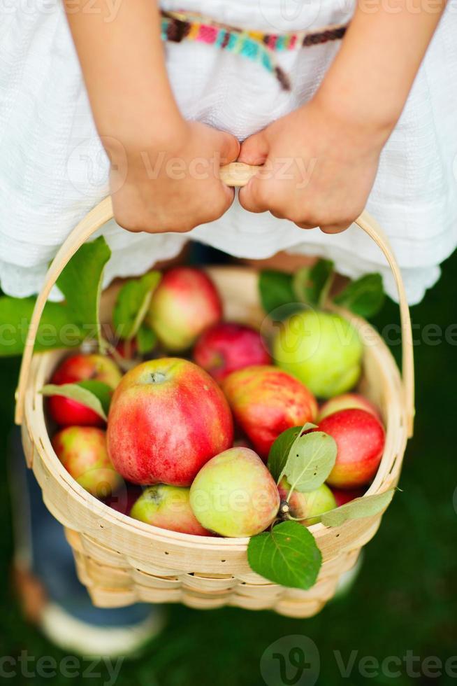 Bio-Äpfel in einem Korb foto