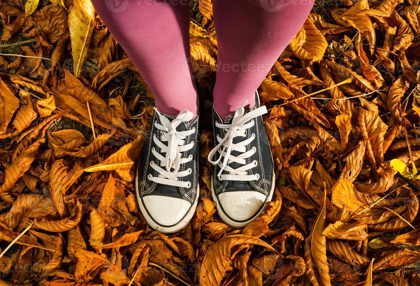 stehend auf Herbstlaubhintergrund foto