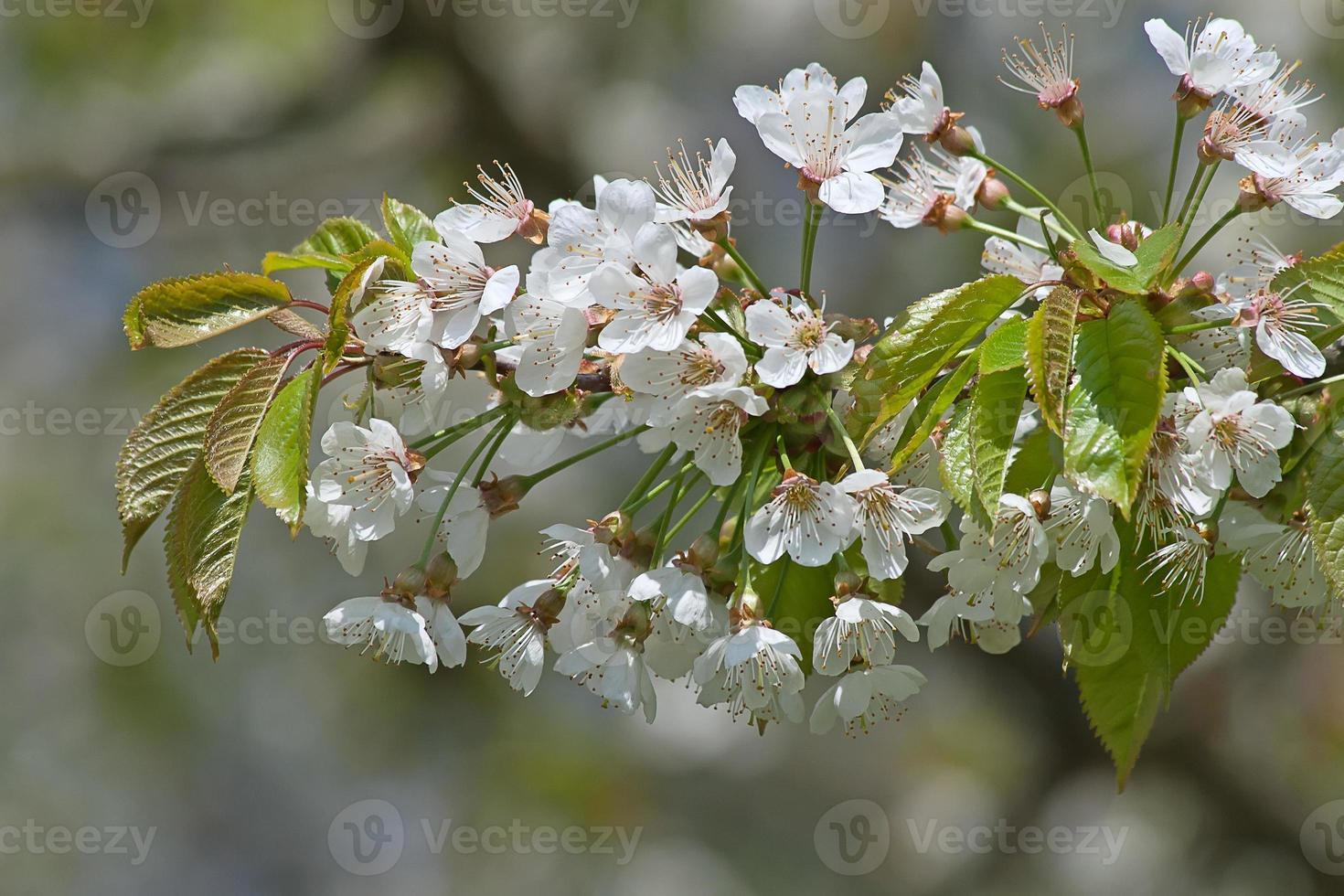 Apfelgarten foto