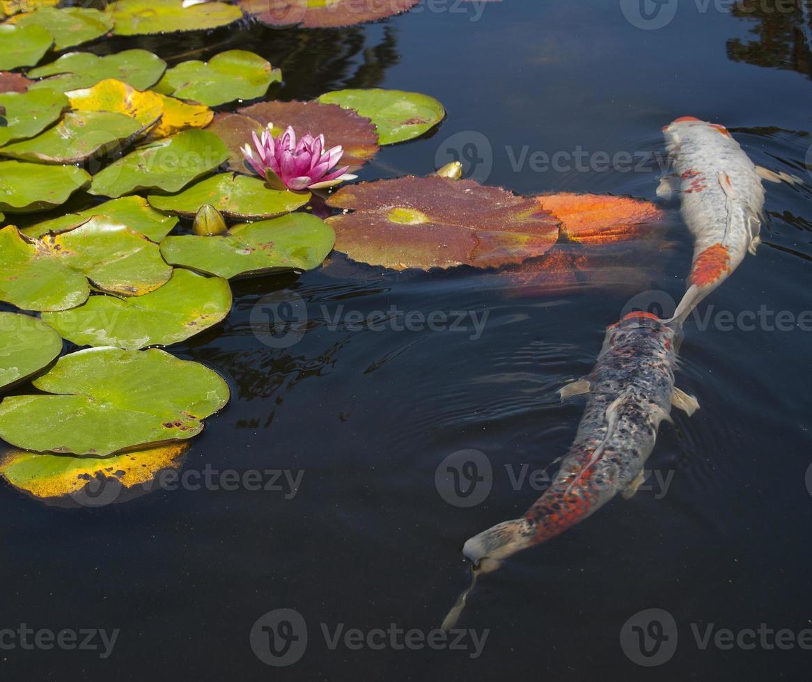 Fischteich foto