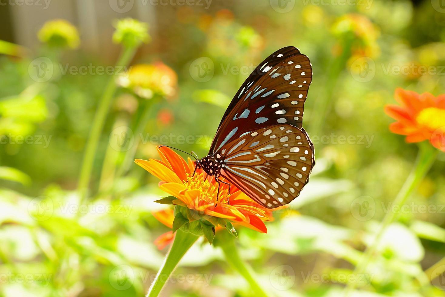 Schmetterling und Blume foto
