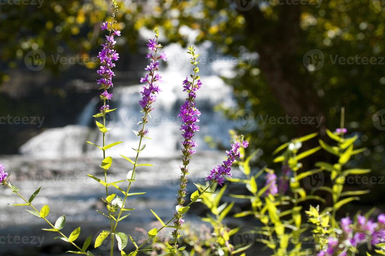 schöne Sommerblumen auf einem Hintergrund des Wasserfalls foto
