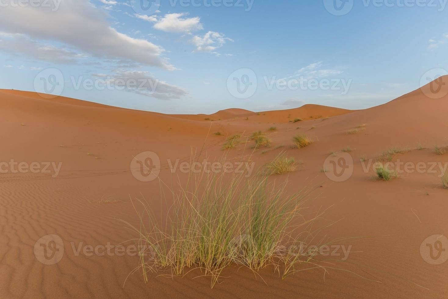 Gras in der marokkanischen Wüste foto