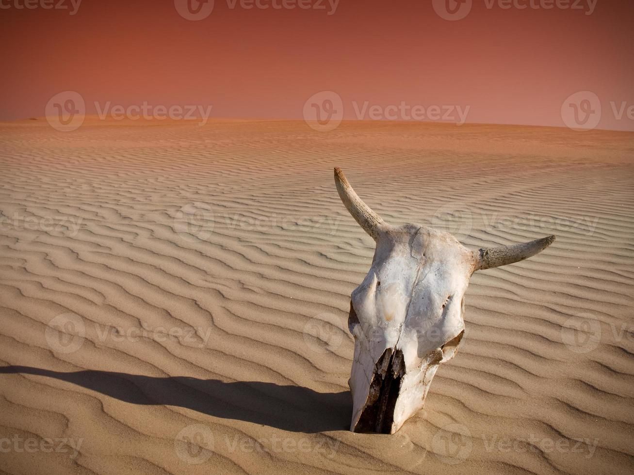 tot in der Wüste foto