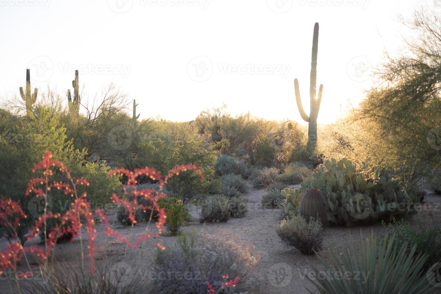 Wüstensonnenaufgang foto