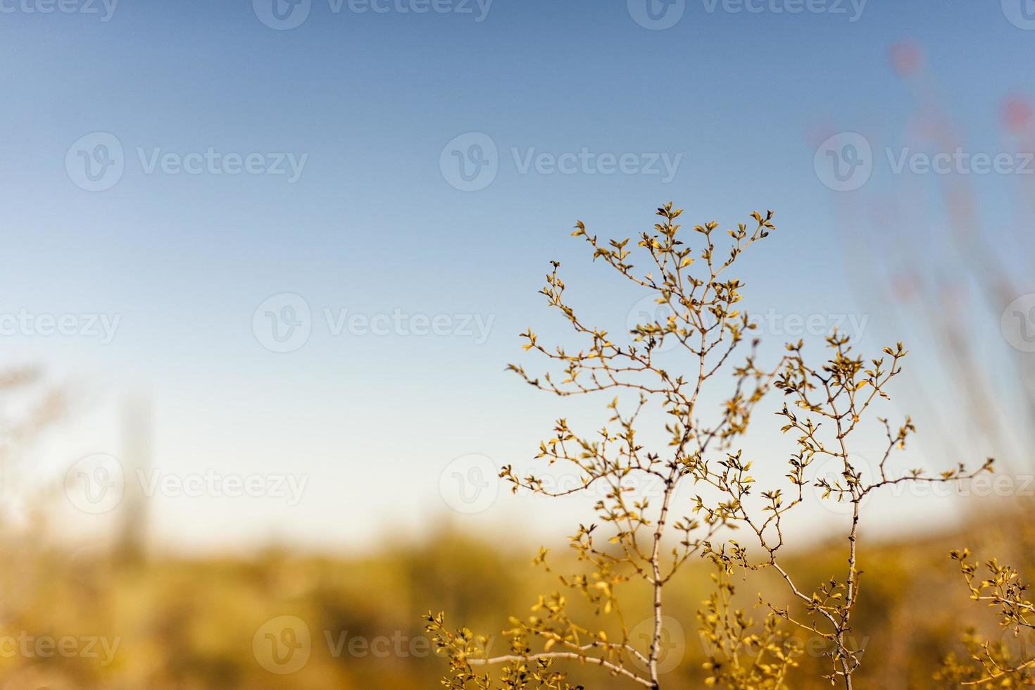 Wüste wärmt foto