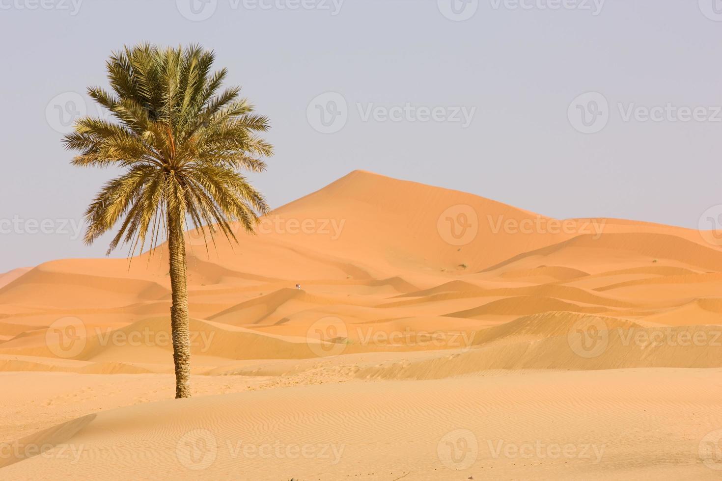 Sahara Wüste foto