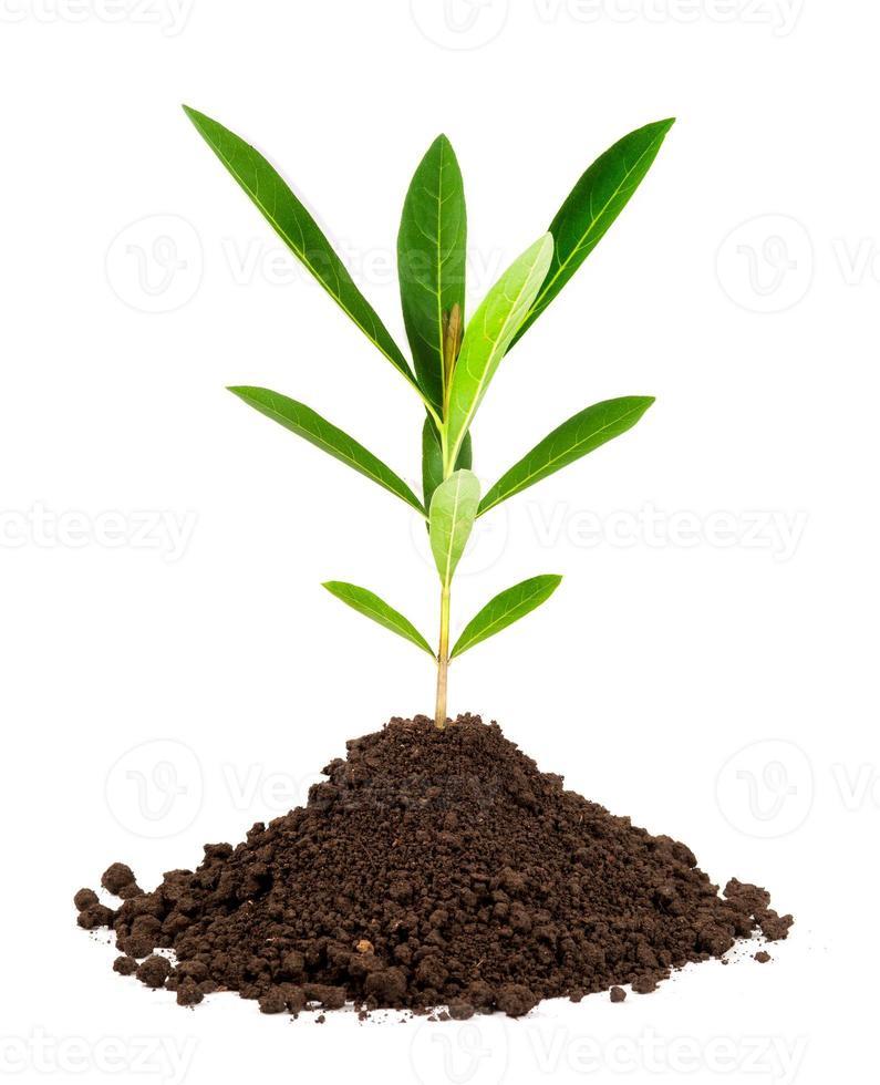 wachsende Pflanze mit unterirdischer Wurzel sichtbar foto