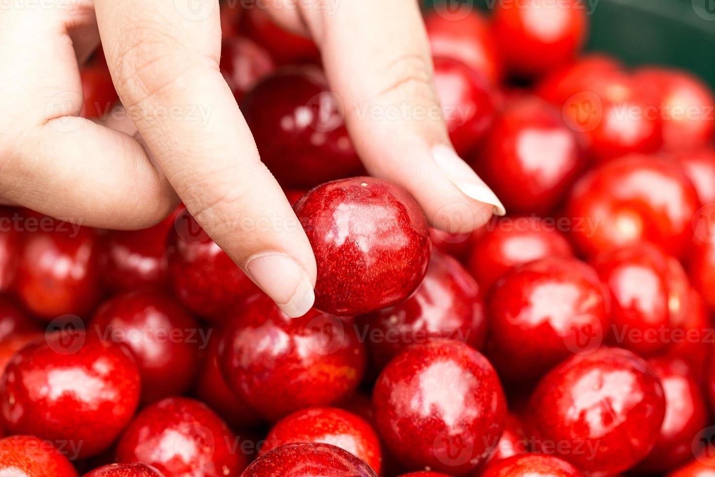 frische köstliche Kirsche in der Frauenhand, Nahaufnahme foto