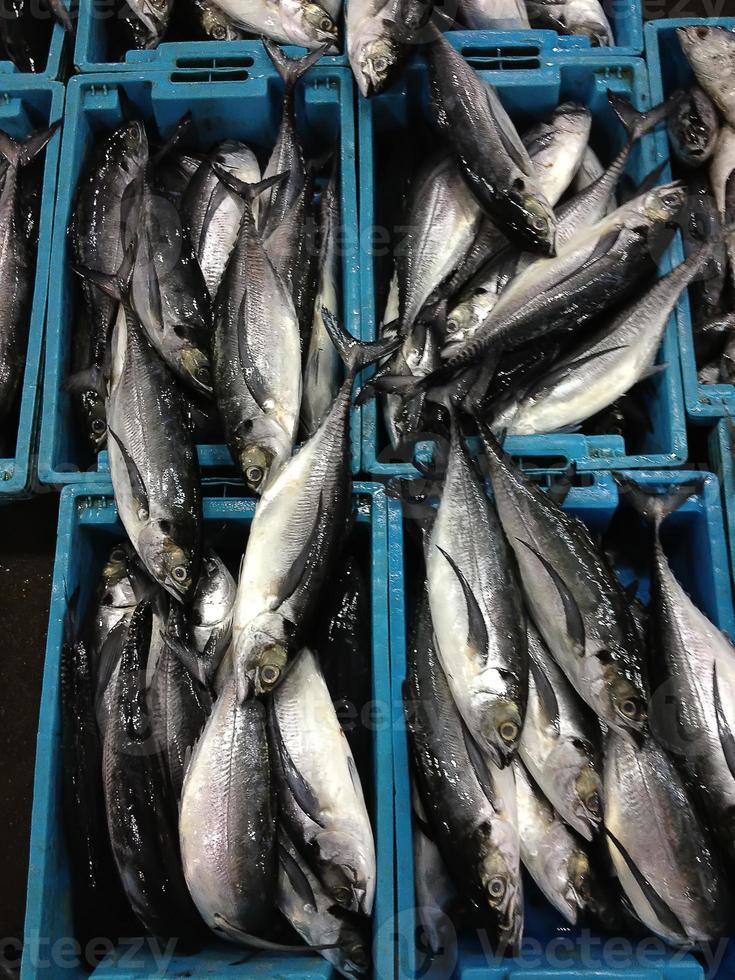 frische Seefische in Kisten foto