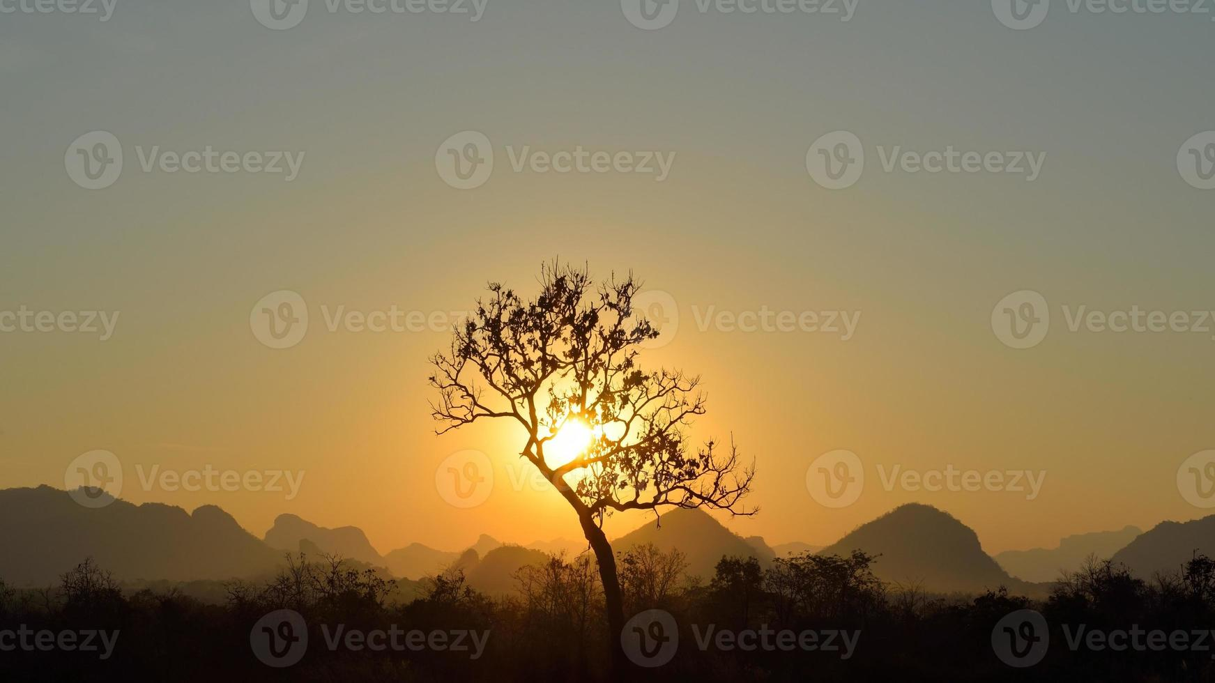 Baumschattenbild auf Gebirgshintergrund foto