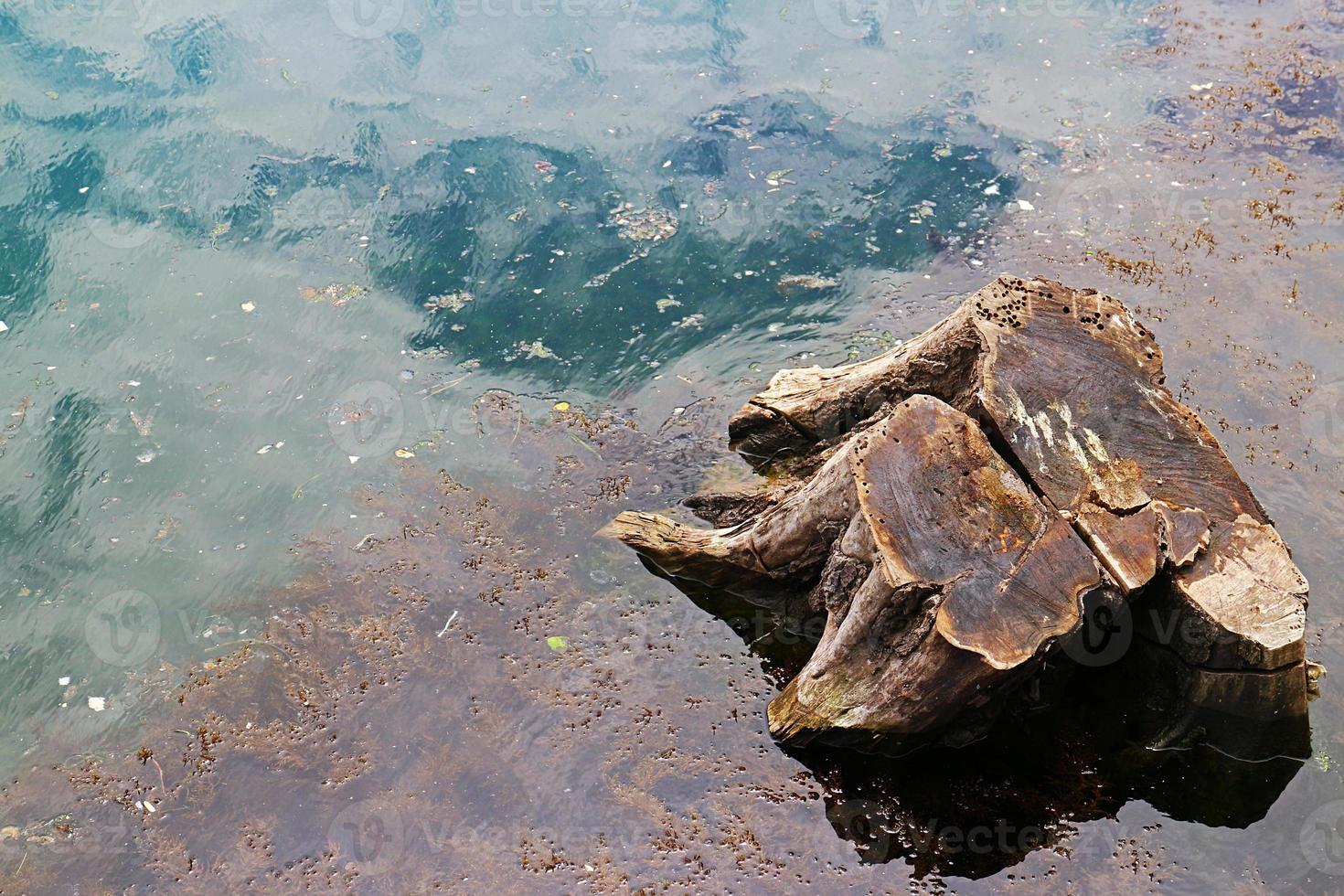 Baumwurzeln im Wasser schneiden foto