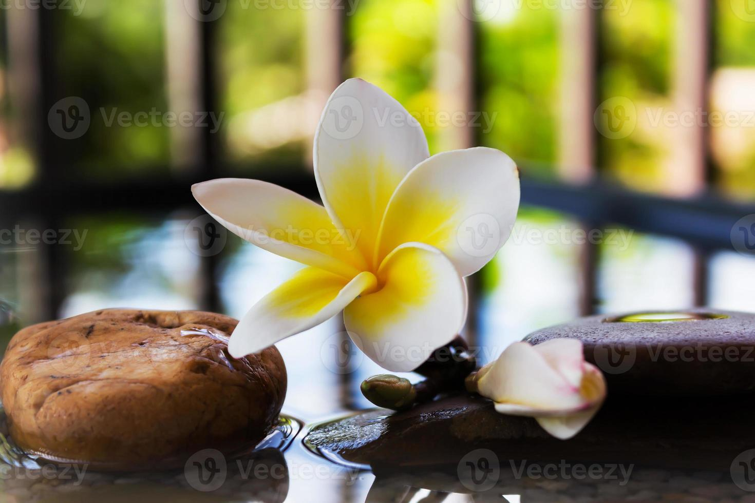Plumeria oder Frangipani auf Wasser und Kieselstein verziert foto