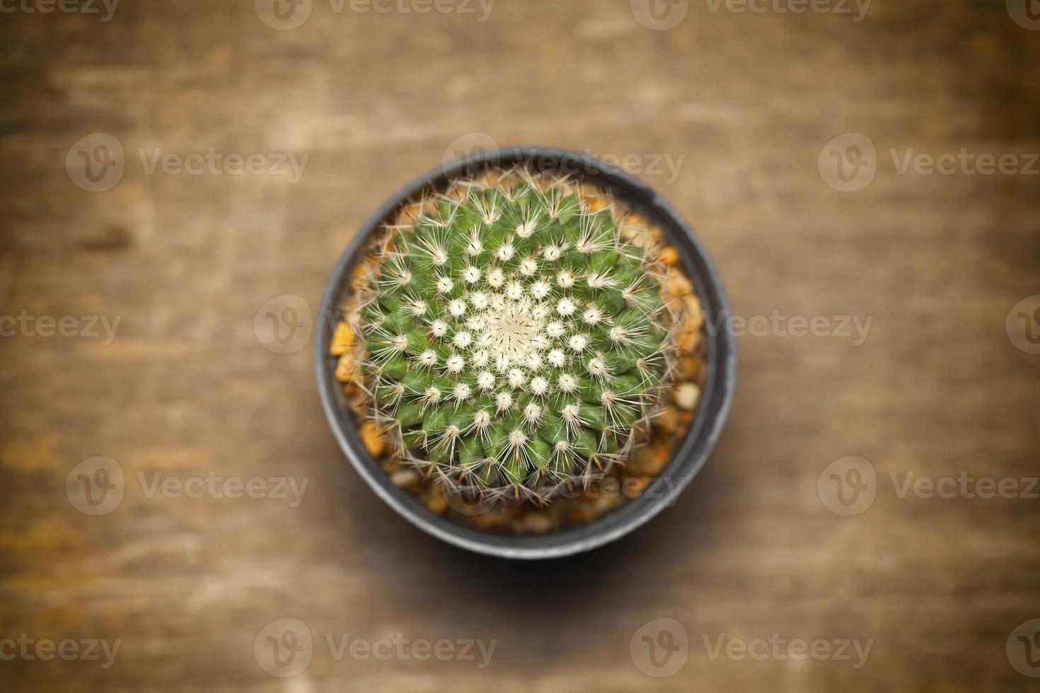 Kaktus auf Holztisch. foto