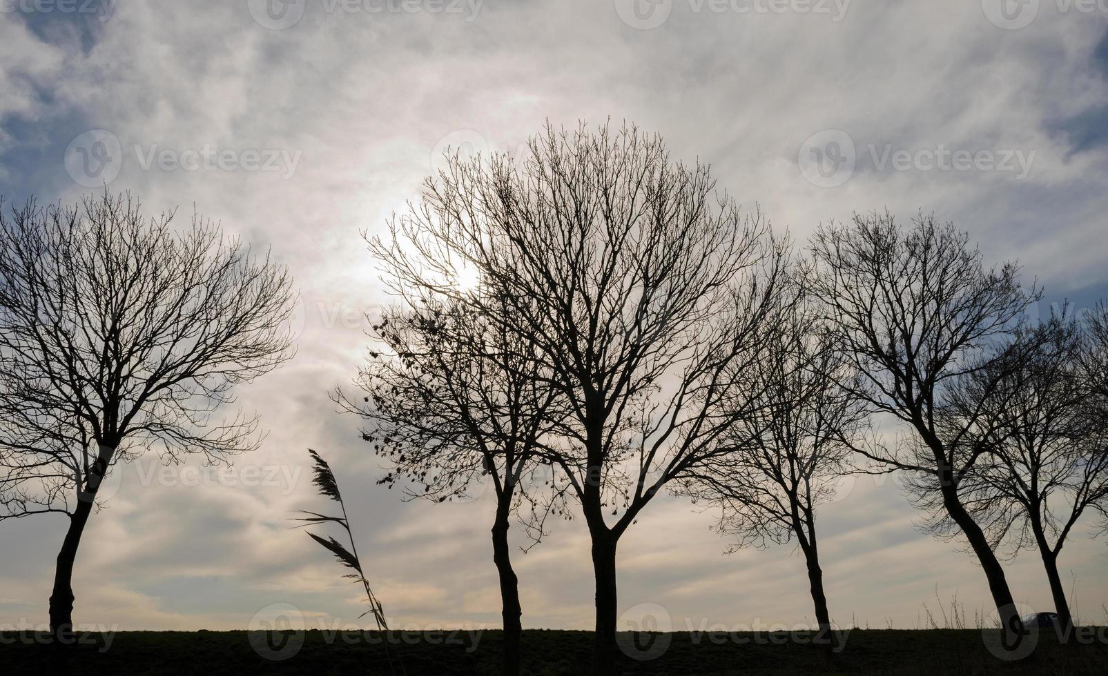 Bäume im Sonnenlicht entlang Ackerland im Winter foto