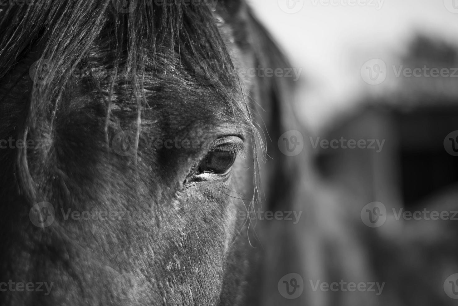 Pferdeauge hautnah foto