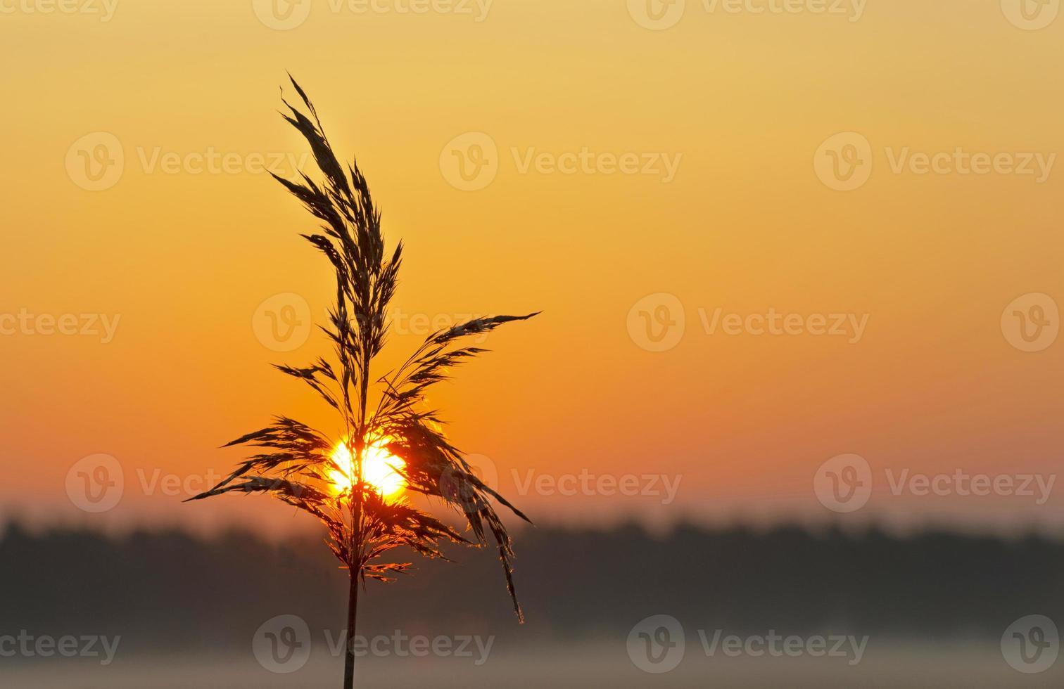 Sonnenaufgang über einer nebligen Landschaft im Frühjahr foto