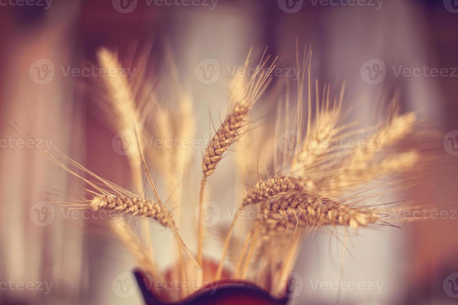 Weizen in einer Vase foto