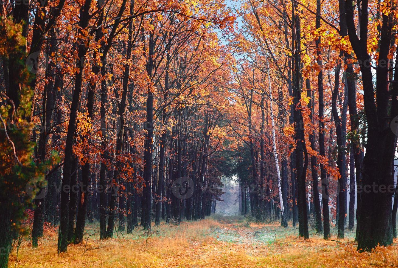 Gasse im Herbstpark. foto