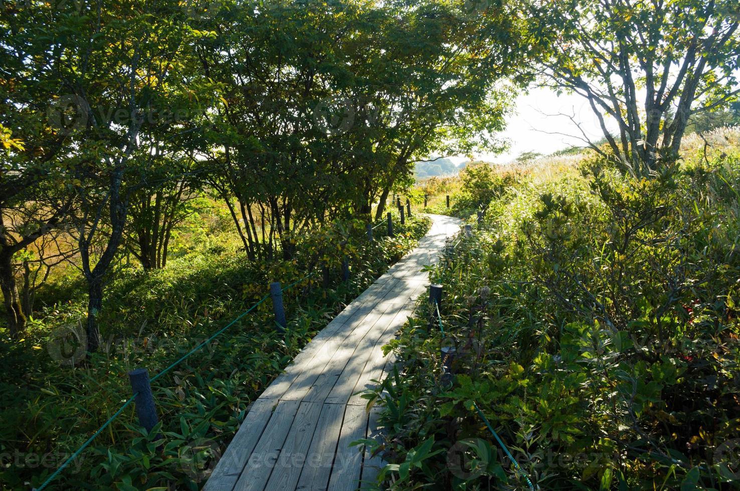Gehweg von Feuchtgebieten, die aus Holz gemacht wurden foto