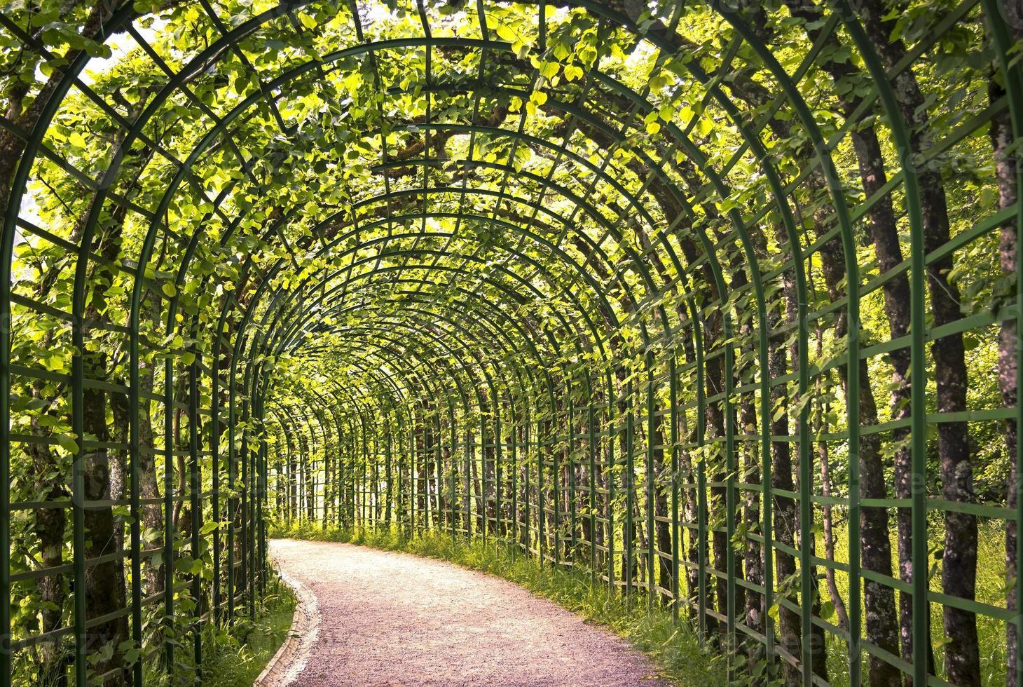 schöne grüne Arkade foto
