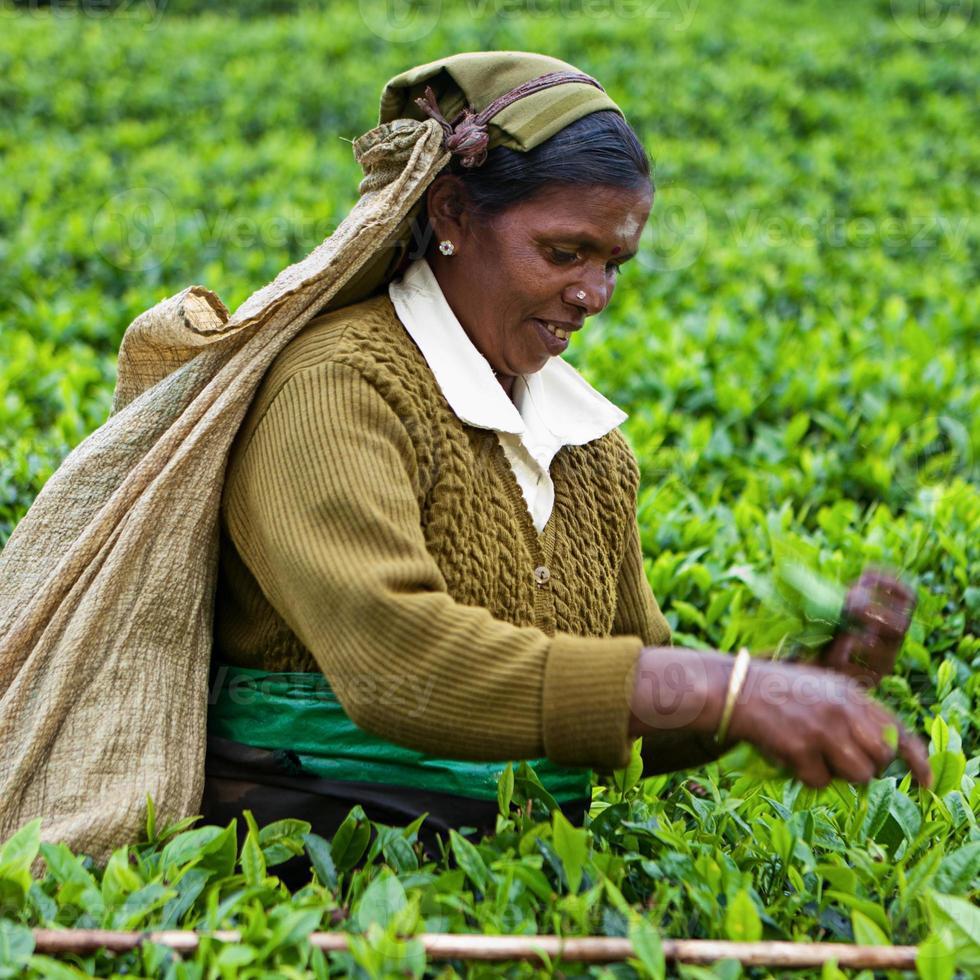Tamilische Teepflücker, Sri Lanka foto