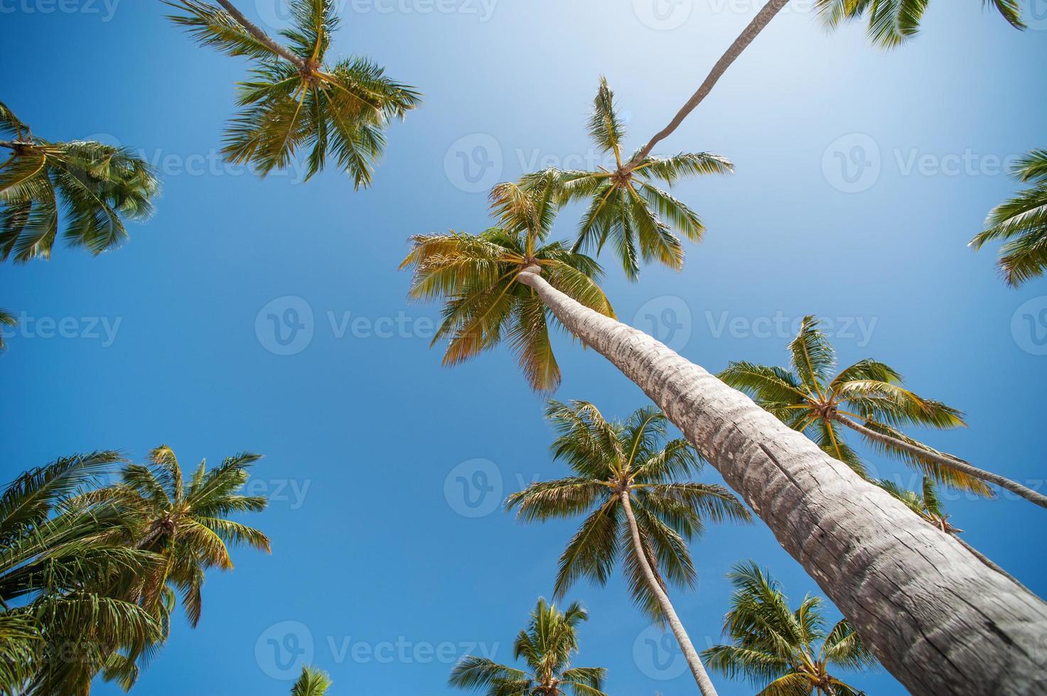 Palmen Tapete foto