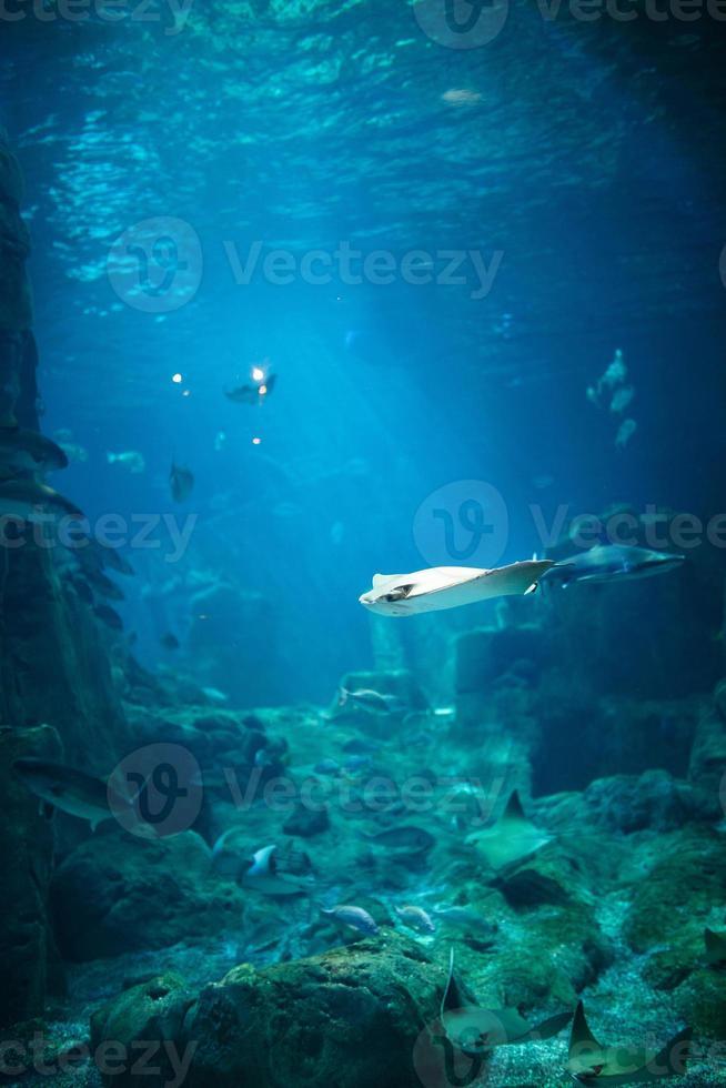 exotische Fische in einem Aquarium foto