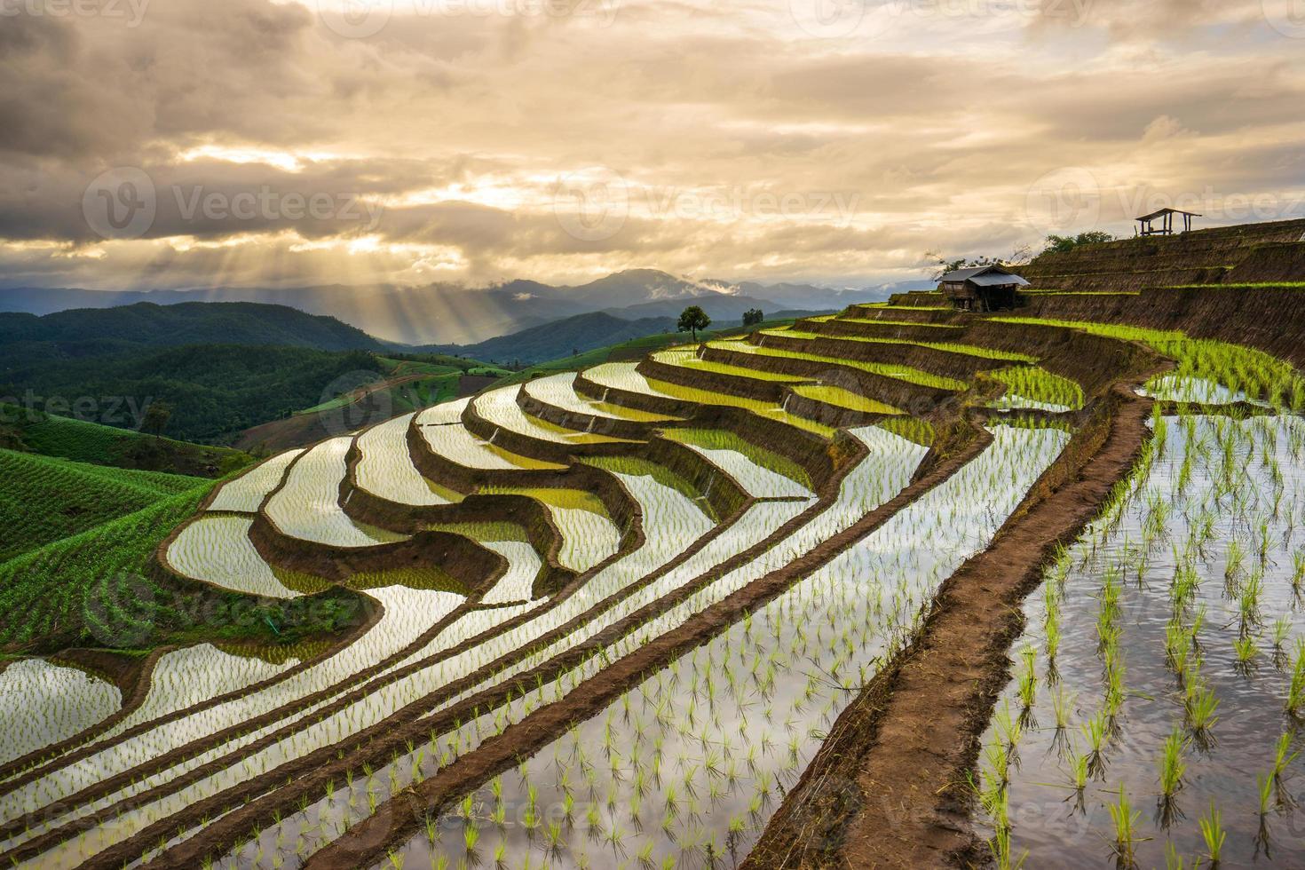 terrassiertes Reisfeld in Mae Cham, Chiangmai, Thailand. foto