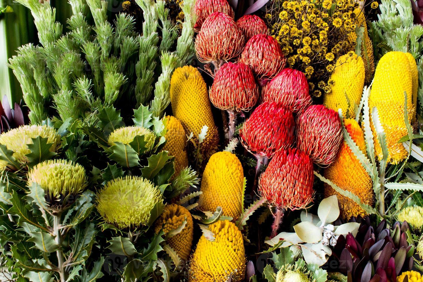 australische Banksia und Waratah Wildblumen foto