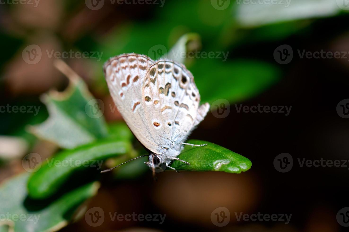 Schmetterling auf Blatt foto