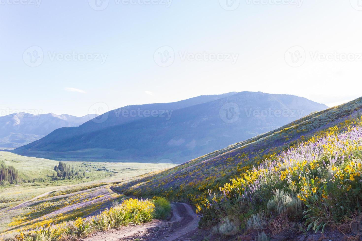 Wildblumen foto