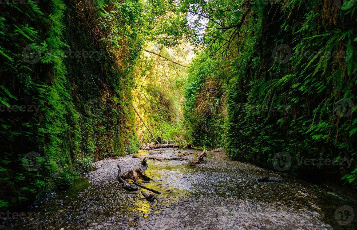 Redwood Nationalpark foto