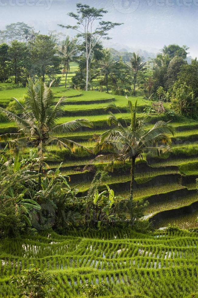 Bali, Indonesien. foto