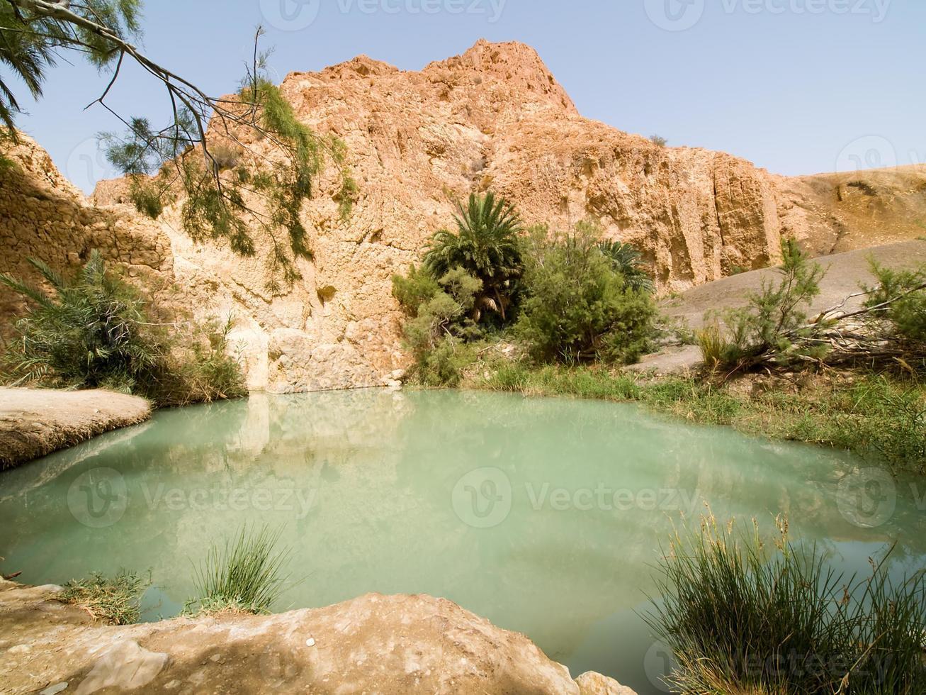 Oase in der Wüste 3 foto